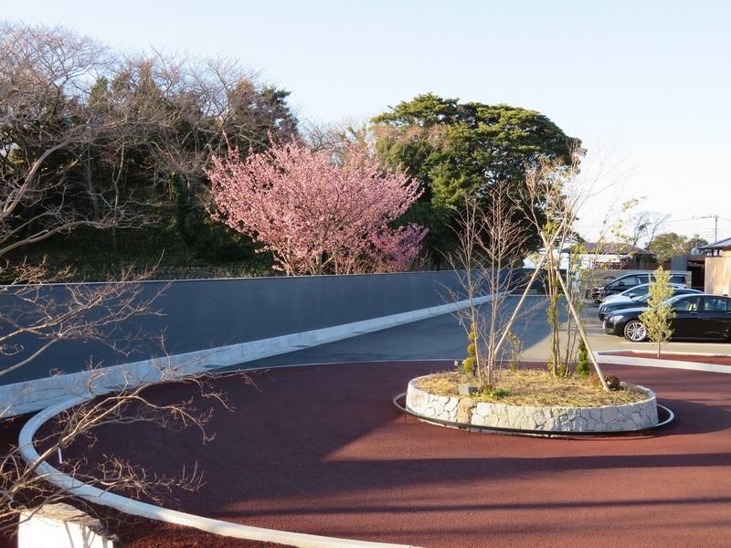 ふたりとわに縁の土肥桜も満開です