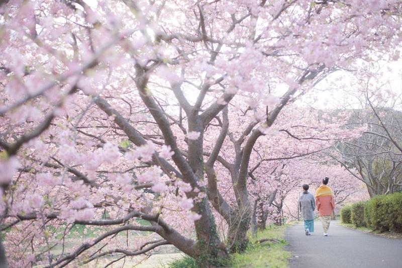 2020.2.6南の桜-01.jpg
