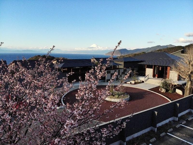 20200208 ふたりとわに縁ドローン 土肥桜と富士山.jpg